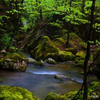 The torrent by rdalpes