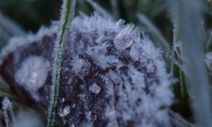 February Ice Grass 01 by TreeClimber