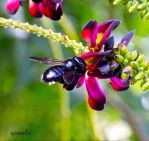 If I Were A Carpenter Bee by FallOut99