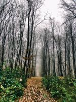 Alone in the forest. by Activvv