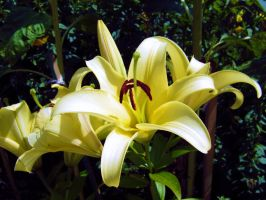 Lily IV by Paul774