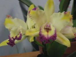 147 orchid show by crazygardener
