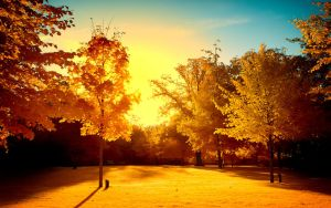 Yellow Trees Part VI by myINQI