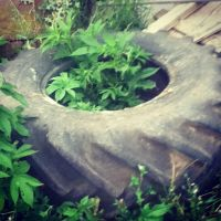 TRACTOR TIRE by LunaPicture