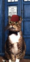 Who Cat by OminousDalek