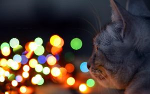 About the cat's sights by ORLOF