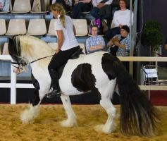 STOCK - 2014 Total Equine Expo-73 by fillyrox