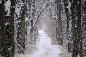 Winter Path by Serjia