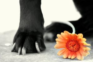 The Flower and the Paw by Kaz-D