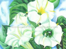 Jimson Weed by midnightgates