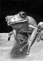 Tree frog by gabor5555