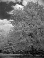 Under the shade tree iR2 by redtailhawker