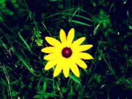 Brown-eyed Susan by ThisTangleOfThorns