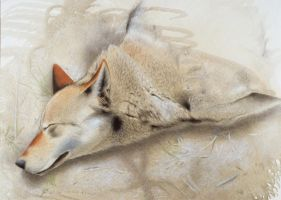 Red wolf by Maple--wolf