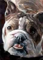 Bulldog by Pickleweasels