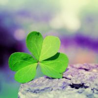 Little shamrock. by 0paline