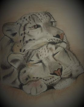 Leopards in Tinted Charcoal by Jills-Designs