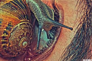 Snail and body 2 by Dr-Benway
