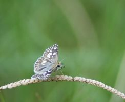 Butterfly on a Weed by Larah88