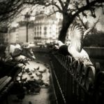 Birds on a fence... by denis2