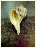 iPhoneography, Spiral Whelk by Gerald-Bostock