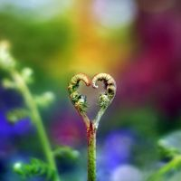 The Nature of Love by P0RG