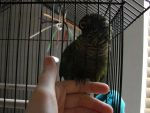 Kiwi - He likes to hold onto fingers by Zolk