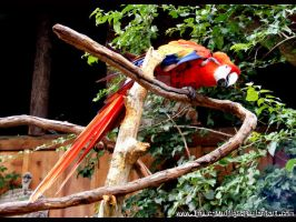 Show off - Red Macaw by Toxic-Muffins-Studio