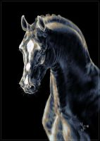 Horses - Portrait by Aaorin