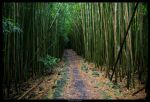 Bamboo Forest 2 by hensler