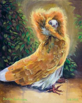 003 FEB07-2015 Jacobin Pigeon 20x16 by moltres