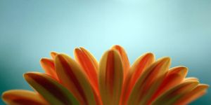 Daisy Sunrise by TruemarkPhotography