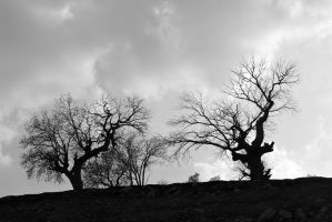 trees by Negar-bendy