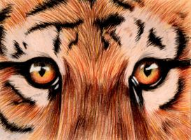Tiger Eyes by otohime0394