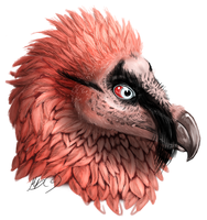 Bearded Vulture by gonedreamer