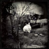 Where Went Alice? by intao