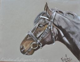 Sander, pastel portrait by kristinloft