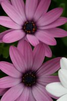 flower8 by KnB-Stock