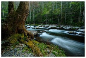 A Wider View by TRBPhotographyLLC