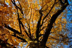 The rise of Autumn by JeffreyDobbs