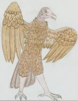 New Turkey Vulture Character by wolfforce58