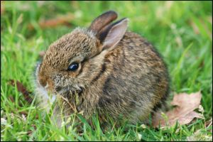 Baby Bunny Ball by algy