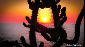 Cactus-Window For Sunset by Str3pt0coccos