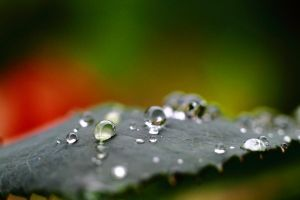 Waterdrops on a leaf no. 4 by luka567