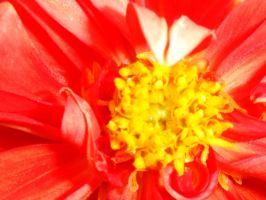 Flower Close-Up by amdillon