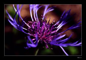 Purple Spider by RhavinCreative