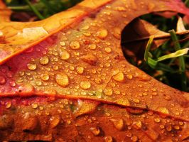 colors and drops in autumn vie by angedevil