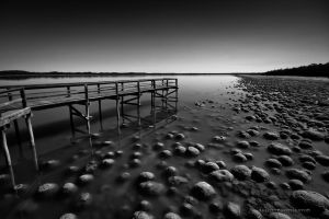 Lake Clifton mono by AbbottPhotoArt