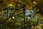 Autumn Branches by PsychDreamerPhotos