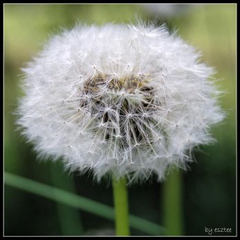 Blow ball :) by esztee